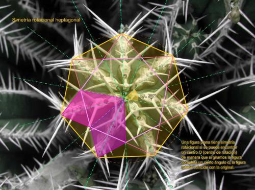 Simetría heptagonal