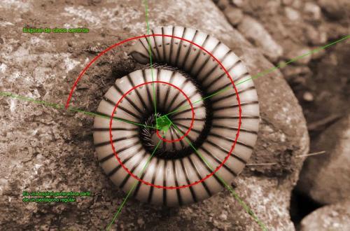Espiral de cinco centros